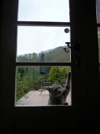 La Haute Grange : 猫のチャーリー