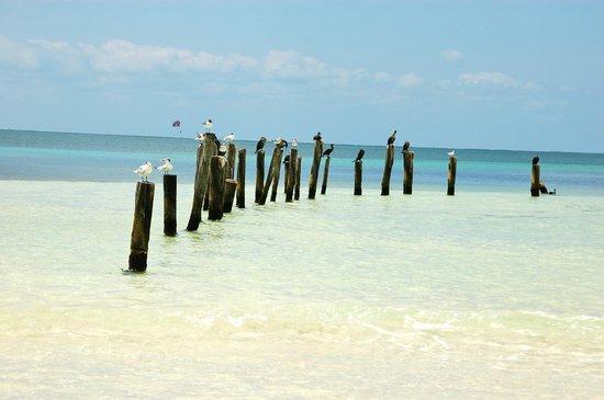 Hacienda Tres Rios: wildlife - beach has nice sandbars which extend pretty far into ocean