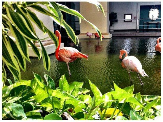 Iberostar Grand Hotel Bavaro: Tiere