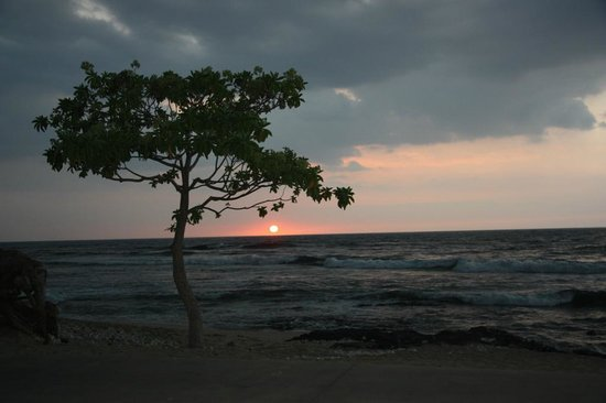 Four Seasons Resort Hualalai: New beach tree!