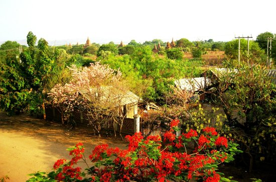 Thurizza Hotel Bagan: view from terrace