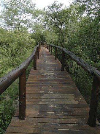 Lion Sands - Tinga Lodge: caminho para o quarto