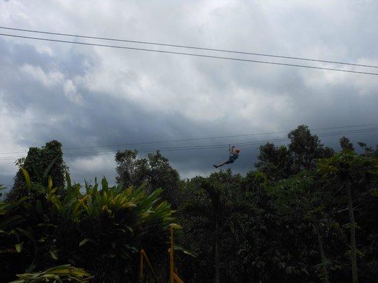 Rain Forest Zipline Corp. : One of the longer ziplines