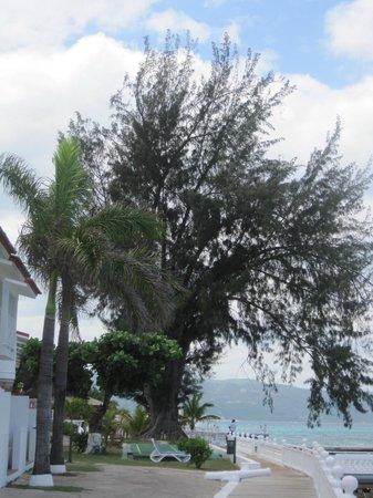 Royal Decameron Montego Beach: grounds