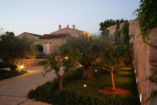 Sa Franquesa Nova: Olive trees