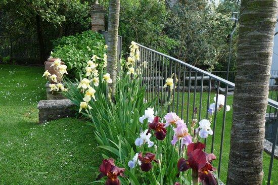 Borgo Grondaie: Les iris ♥