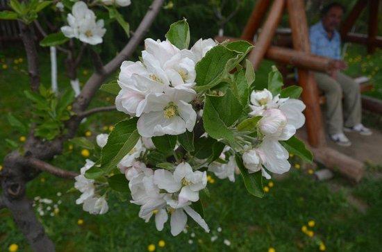 Dor de Bucovina: springtime