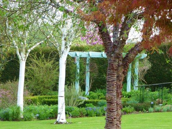 RHS Garden Rosemoor: contrasting barks