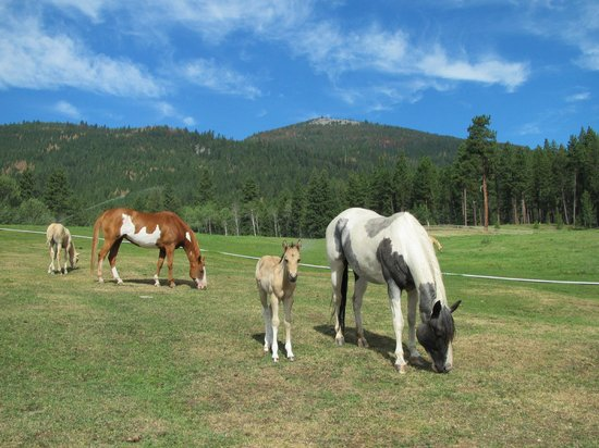 Triple Creek Ranch: Ranch horses roam free