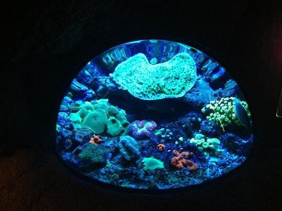 Aquarium de Biarritz Photo