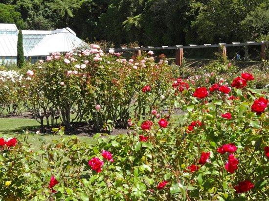 Wellington Botanic Garden: Rose Garden
