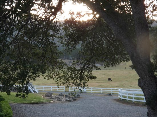 Rancho Bernardo Bed & Breakfast: Long distance shot of mother and baby calf.