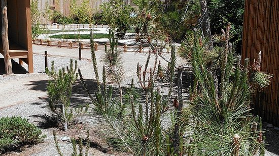 Yume Japanese Gardens: Rocks and Young Plantings