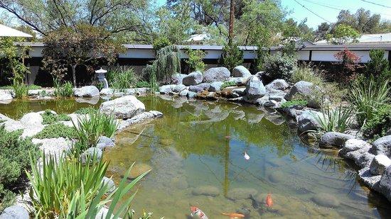 Koi pond picture of yume japanese gardens tucson for Koi pond quezon city