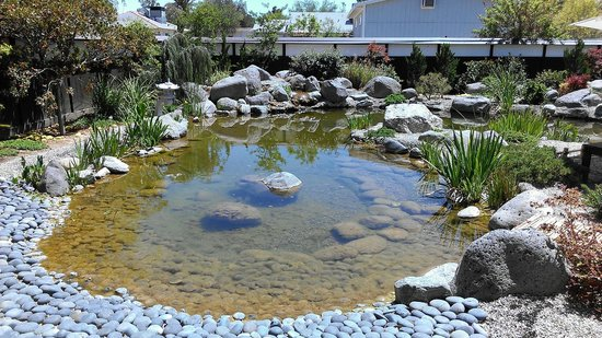 Koi pond picture of yume japanese gardens tucson for Koi pond supply of japan
