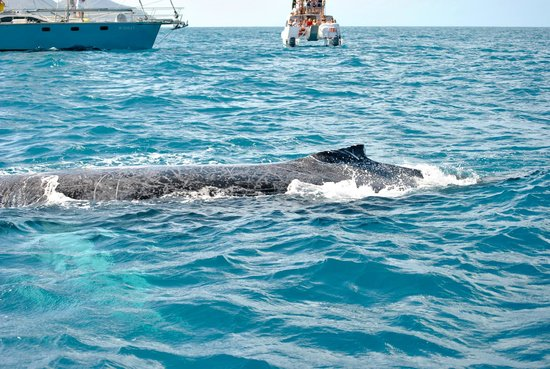 Paradise Cove Oceanfront Villas & Suites: Thar be whales Admiral!