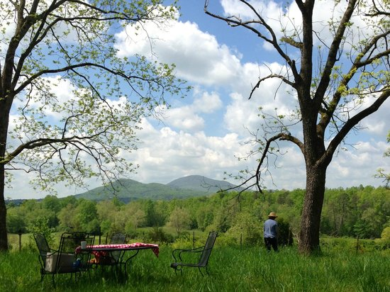 Stovall House: Pastoral backyard