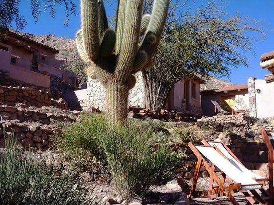 Cerro Chico : El cardon del hotel
