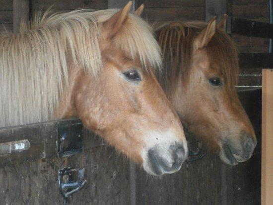 Fattoria Voltrona: cavalli
