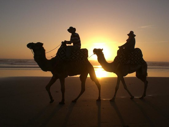Ranch Amodou Cheval: Sunset camel ride