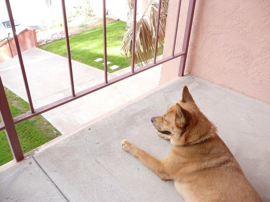 Esplendor Resort at Rio Rico: Our dog discovers she likes watching the world from a balcony