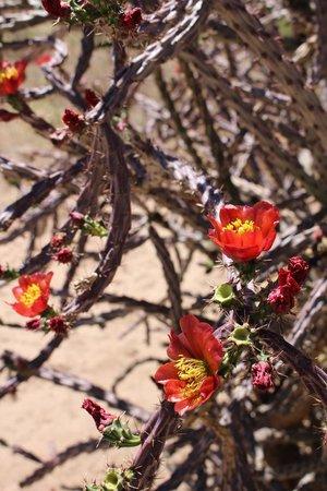 Amado Territory B&B : Blooming desert