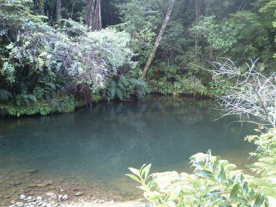 Wairua Lodge - Rainforest River Retreat: One of two water holes, deep and refreshing.