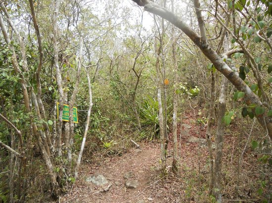 Virgin Gorda Peak: Trail