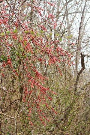 Mashomack Preserve: Pretty spring foliage