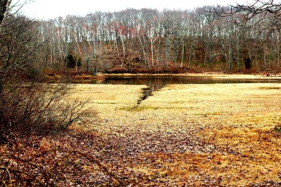 Mashomack Preserve: salt marsh
