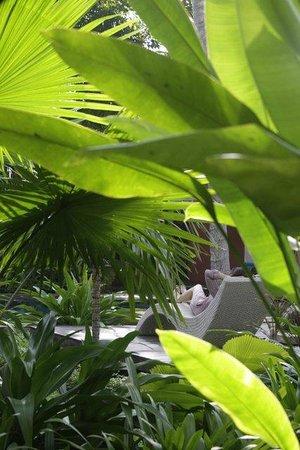 Maison Polanka: garden