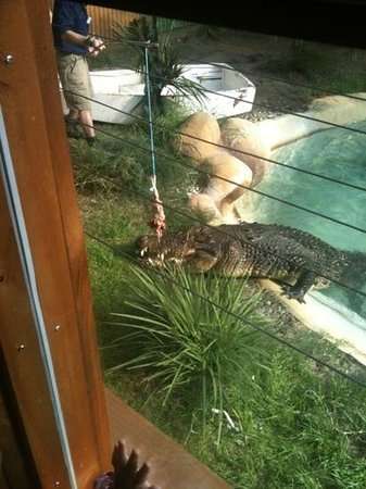 Papillon Cafe : croc area