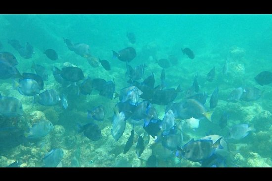 Las EsQuinas Boutique Bed and Breakfast: Our underwater view snorkeling just steps from Las EsQuinas.
