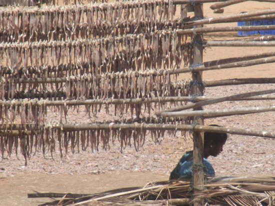 The Retreat Hotel & Convention Centre: Drying racks for the larger fish