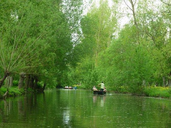 Nouvelle-Aquitaine, Francia: la vensie verte
