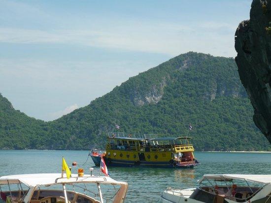 Blue Stars Kayaking : The boat