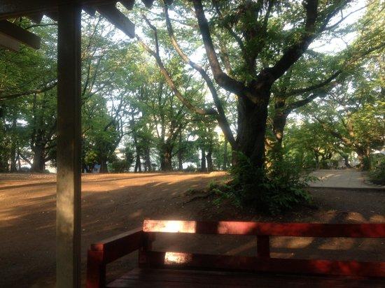 Yono Park: 与野