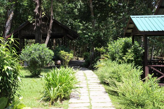 Sukau River Lodge: Pathway to cottages