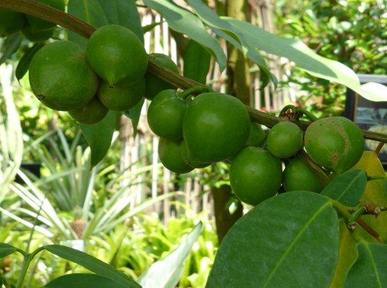 Hamamatsu Fruit Park Tokinosumika: タマゴの木