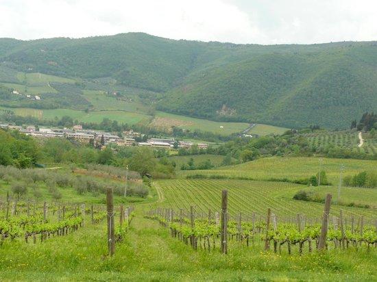 Agriturismo I Veroni: Uitzicht bij het ontbijt