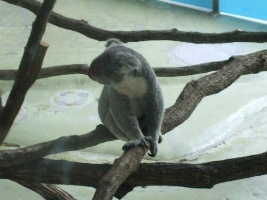 ライオンバスから。迫力あります。 - Picture of Tama Zoological Park, Hino - TripAdvisor