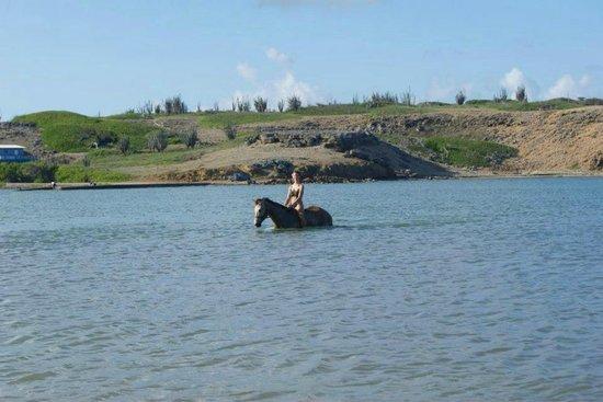 Rancho Washikemba horse ranch Bonaire: Dit is toch geweldig!