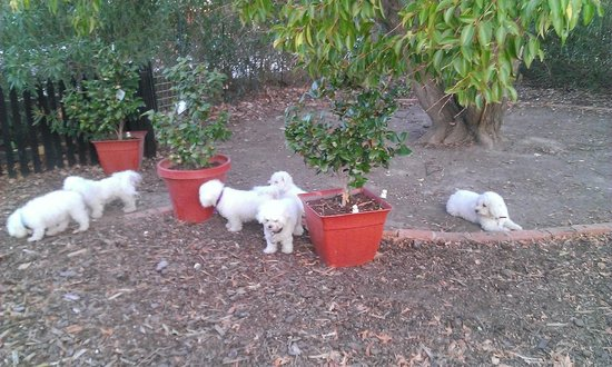Must Love Dogs B&B & self contained cottage: The furry-kids had a lovely yard to play in