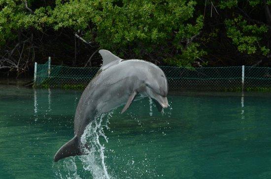 Dolphin Discovery Tortola: Delfino