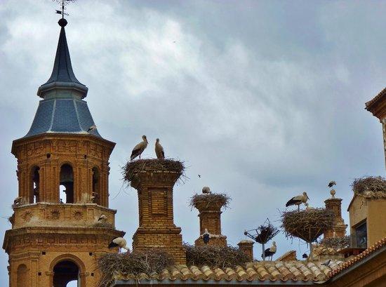 Hotel Palacios : Colonie de cigognes sur la Basilica de Alfaro