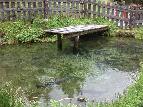 Auberge Nemoz : Fish tank