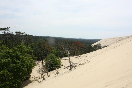 escalier pour monter photo de dune du pilat la teste de buch tripadvisor