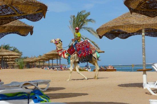 Baron Palms Resort Sharm El Sheikh: hotel beach
