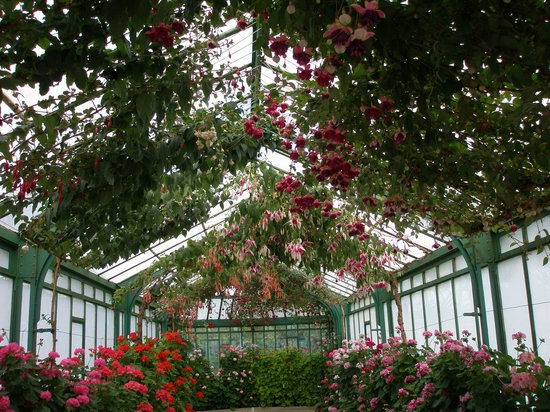 Laeken Palace: Inside greenhouse