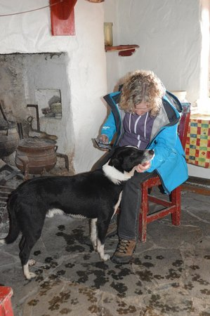 Dan O'Hara's Homestead Farm: Spot the dog having his chin scratched